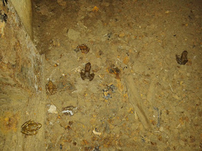 Photo: Маленькие лягушки в подземелье