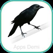 Cantos Pássaro Preto - Melro - Graúna