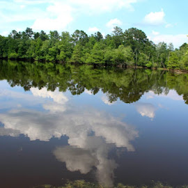 CLOUDS AND TREES REFLECTED ON STILL WATER by Douglas Edgeworth - Uncategorized All Uncategorized (  )