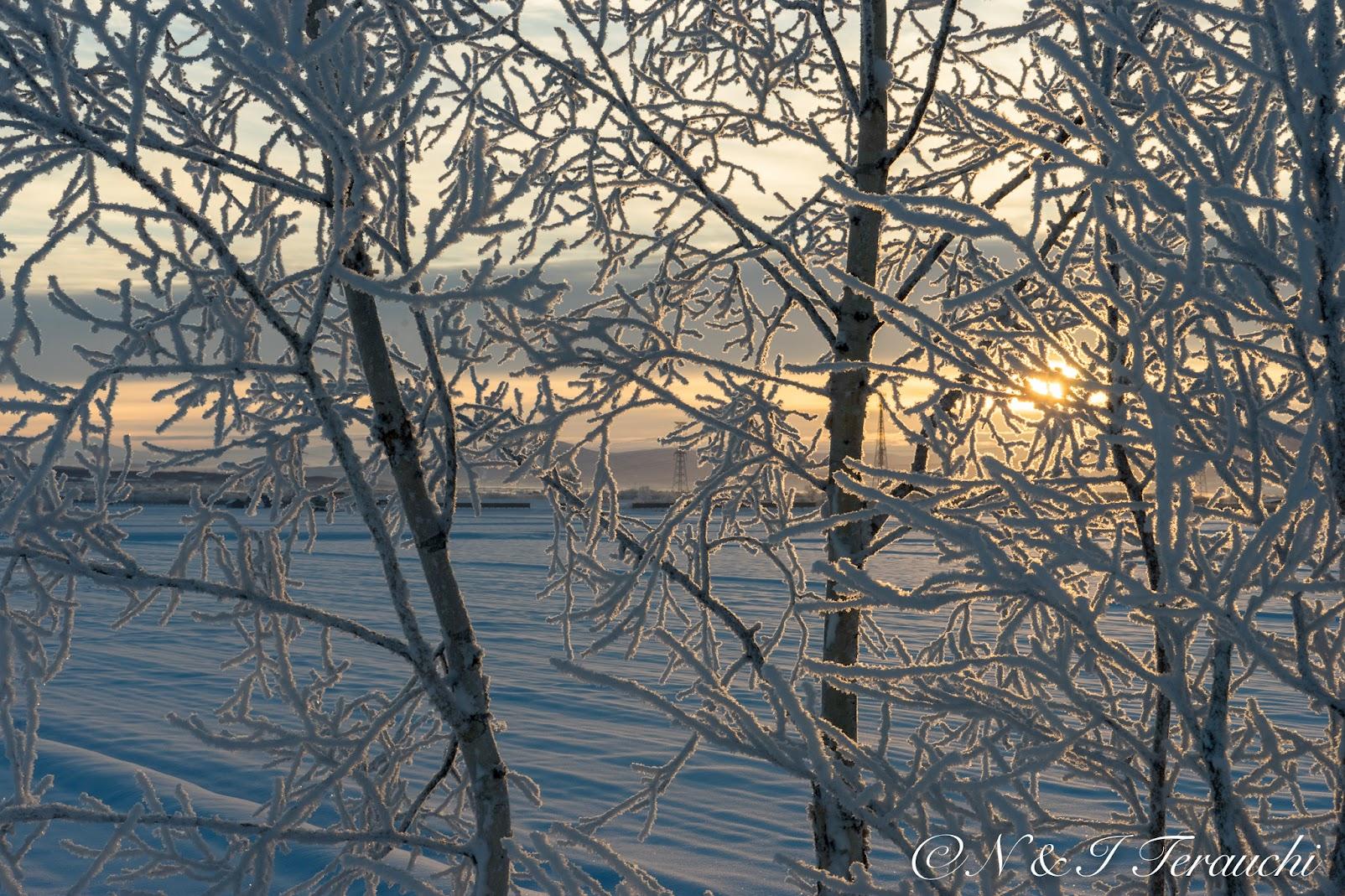 朝陽を浴びてきらめく樹氷