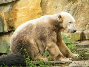 Photo: Marmorbaerchen Knut nimmt erst einmal Platz ;-)
