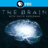 The Brain with David Eagleman