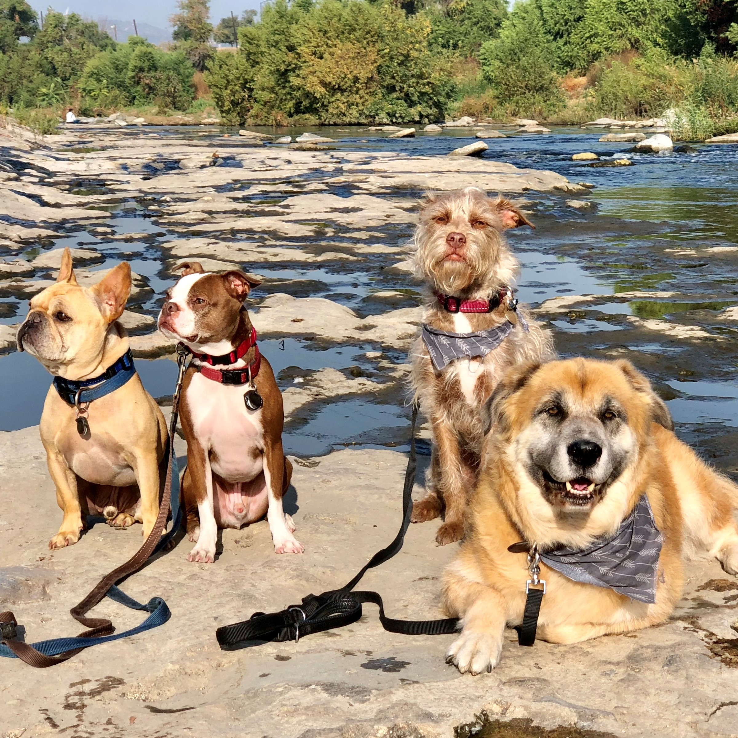 Pack dog hikes in LA