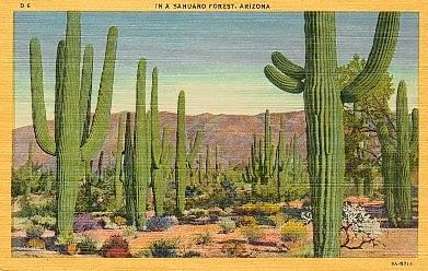 sabino canyon desert Tucson cactus image
