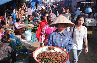 Photo: Edible insects for sale at Vientiane'sKhua Din Market