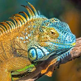 by Judy Rosanno - Animals Reptiles ( alamogordo, alameda park zoo, new mexico )