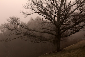 Photo: Wonderful Old Tree #365Project curated by +Simon Kitcher
