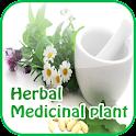 Plantes médicinales et herbes icon