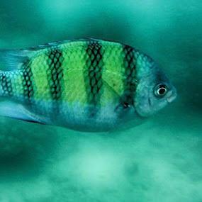 Fishy  by Deep Ocean - Animals Fish ( blue, underwater, fish, beautiful, sea,  )