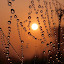 Sun with dewdrops  by Shah Årif - Abstract Water Drops & Splashes ( sunrise, golden, dewdrops, abtract, sun )