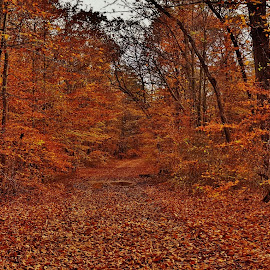 Telegraph Road Autumn Scene by Matthew Beziat - Transportation Roads ( forests, patuxent research refuge north tract, autumn, telegraph road, fall, anne arundel county, historic roads, maryland, trails, patuxent research refuge,  )
