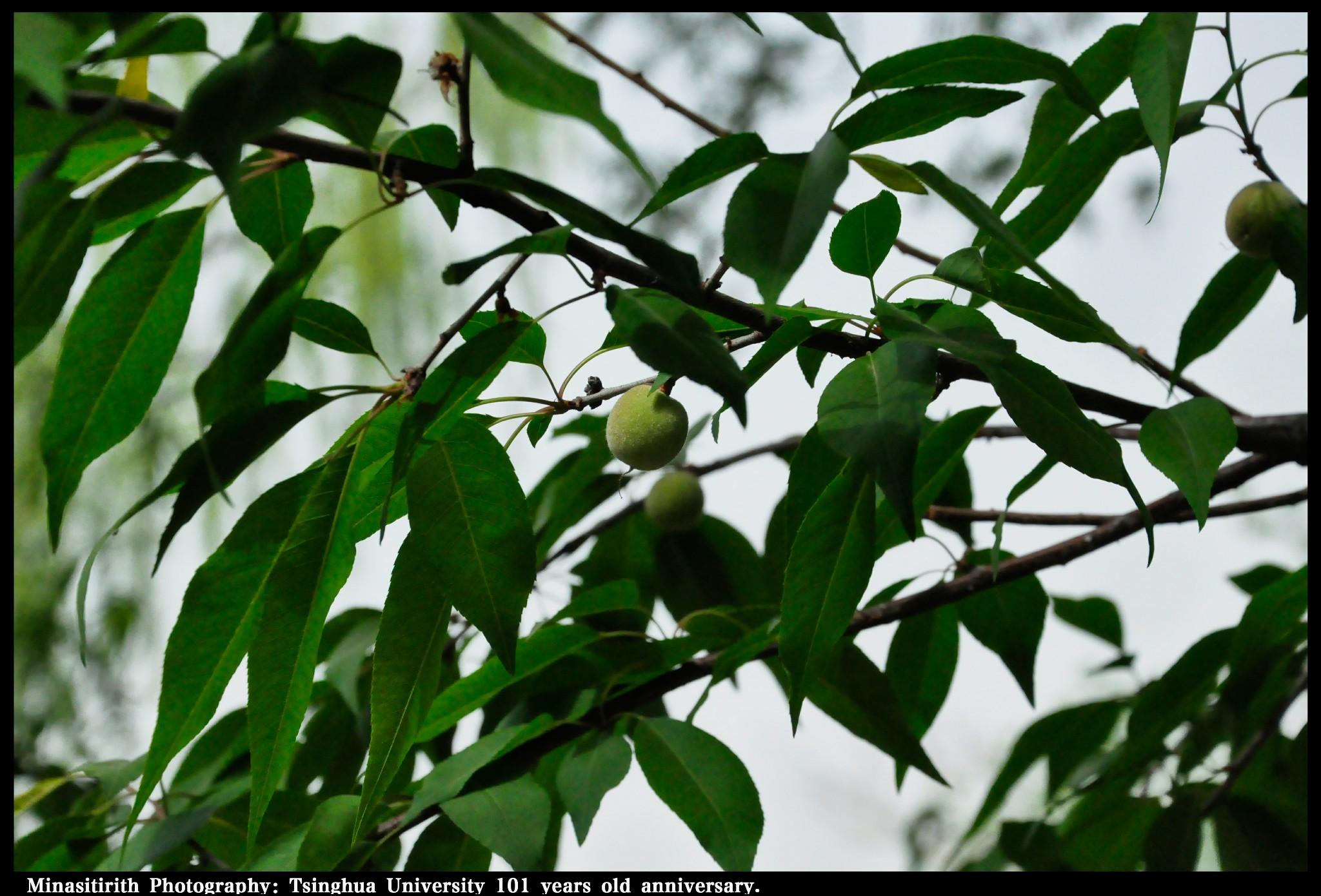 Photo: www.minasitirith.devaintart.com