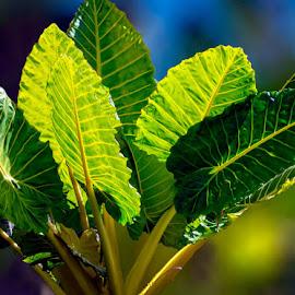 Enjoying the Sunshine by Joan Sharp - Nature Up Close Leaves & Grasses ( sunlight, plant, greens, leafy, blues,  )