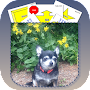 Rally Obedience Dog Training APK icon