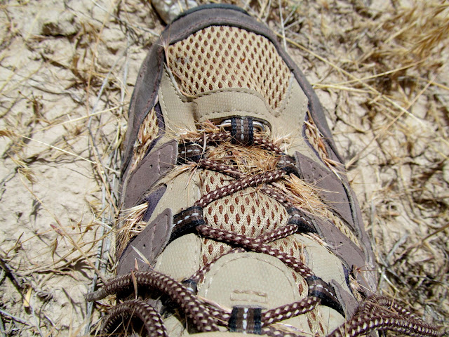 Grr...cheatgrass seeds in my shoes