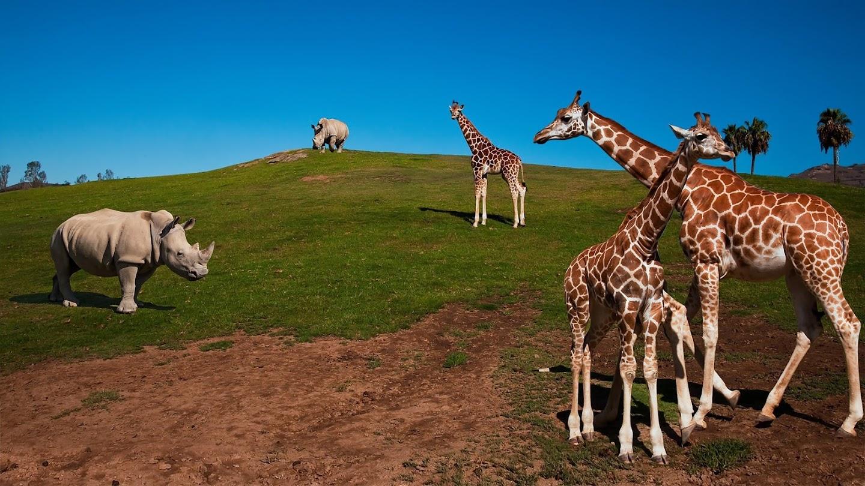 The Zoo: San Diego - California Tales