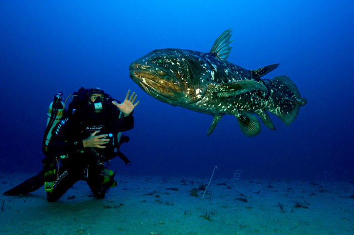 Laurent Ballesta spots the legendary Coelacanth / Gombessa in the Indian Ocean, off the coast of South Africa