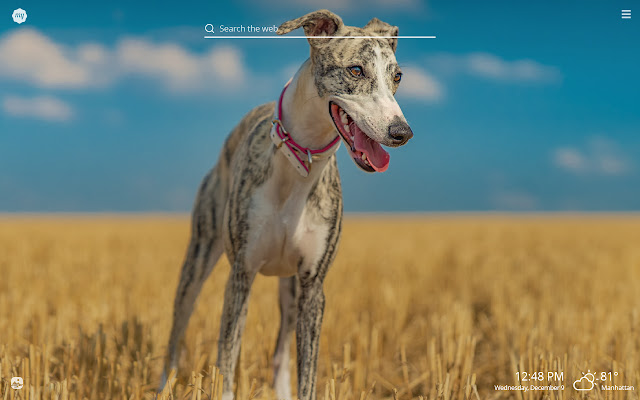 My Greyhound HD Wallpapers New Tab Theme