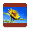 Prediction of Flowering Time APK