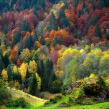 Photo: Palette Nature