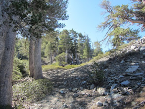 Photo: The topography widens out as North Backbone Trail climbs the northwest flank of Pine Mt.