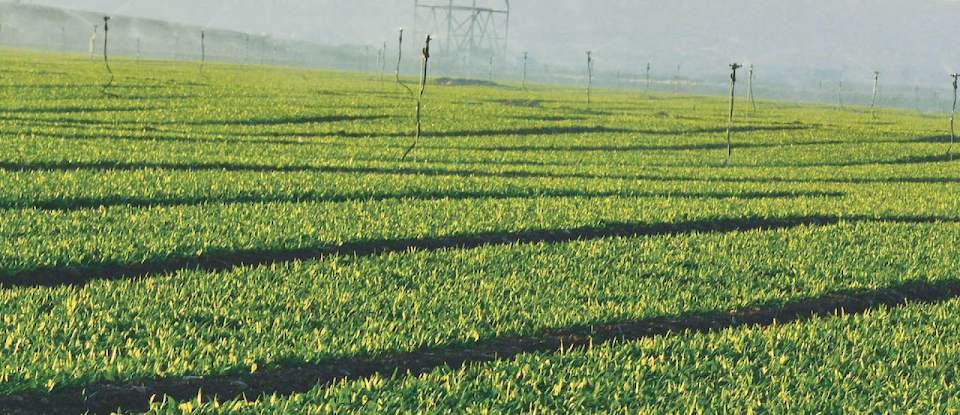 jain-irrigation-systems-hero-image