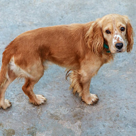 by Veli Toluay - Animals - Dogs Portraits