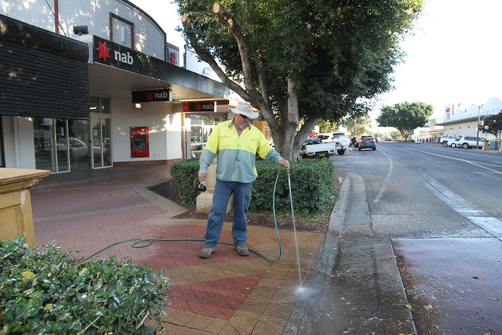 Council worker Shane Hankinson hoses down the street under the Maitland Street ficus, home to Narrabri's starlings.