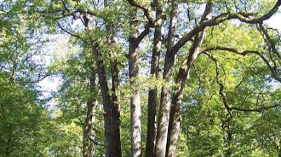 sentier des 6 frères moyemont