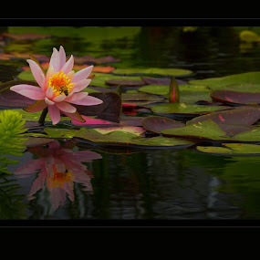 Lotus Buzz by Jeff Dugan - Nature Up Close Other plants ( lotus, waterscape, bee, reflections, pond )