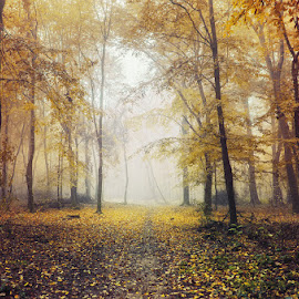 2643 by Zsolt Zsigmond - Landscapes Forests ( foggy, forest, nature, woods, trees, misty, mist, path, trail, foliage, fall, leaves, autumn, landscape, fog )