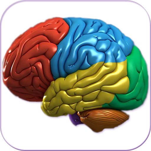 3D Human Brain +