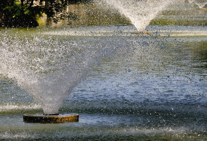 Allegria diagonale di www.fioregiallophoto.it