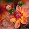 IMG_3205-12pix.jpg