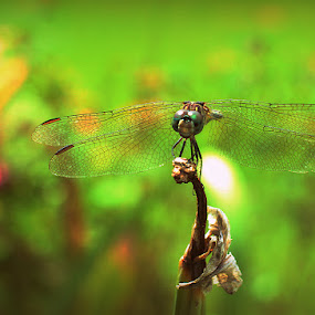 Happy by Stephanie Munguia-Wharry - Novices Only Macro ( bug, dragonfly )