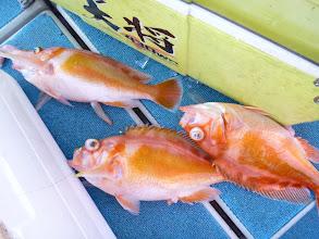 Photo: 今度はアカイサキのトリプル! しかし美味しい魚です!