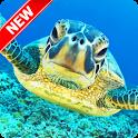 Turtle Wallpaper icon