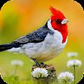 Bird Wallpaper APK