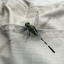 Slender Skimmer or Green Marsh Hawk