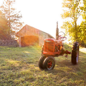 :: catching the afternoon light :: by April Brown - Landscapes Prairies, Meadows & Fields ( field, red, afternoon, farmall, tractor, sun )