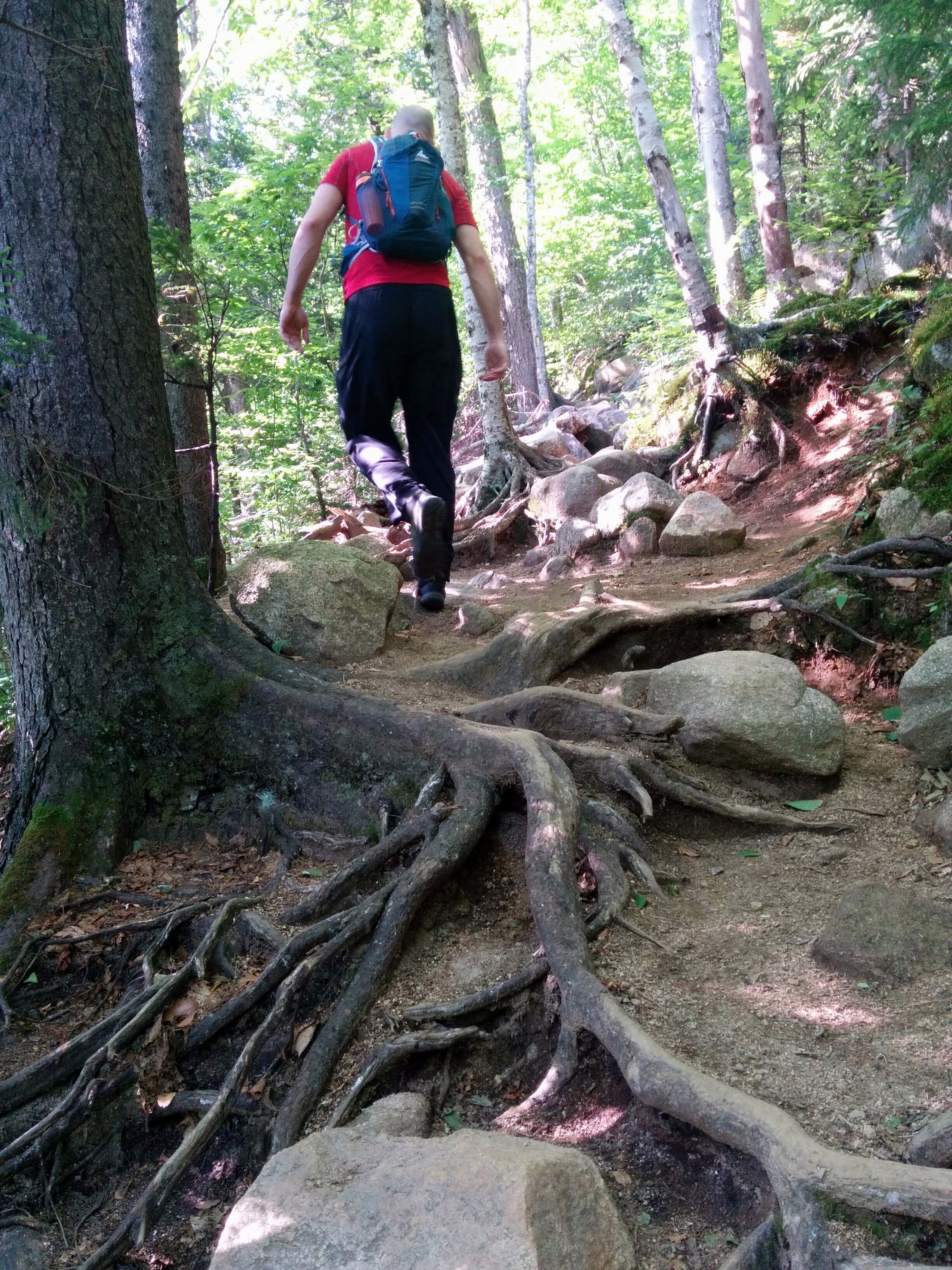 Photo: Hiking among the roots and rocks.