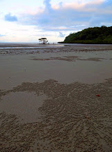Photo: Bubble Crabs create untouched patterns in the wet sand. Cape Trib.