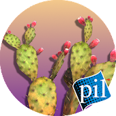 PI VR Wildlife Wonders