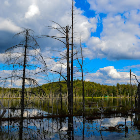 SWAMP by Marc-Andre Grenier - Landscapes Waterscapes ( water, reflection, sky, mountain, trees, swamp,  )