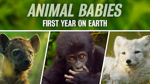 Animal Babies: First Year on Earth thumbnail