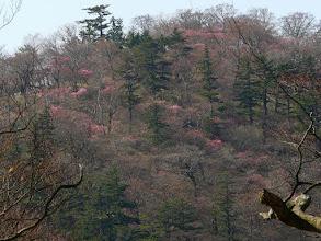 Photo: やしおコースの登山道からの遠望