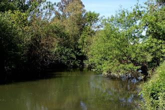 Photo: Putah Creek - Camp Putah Area