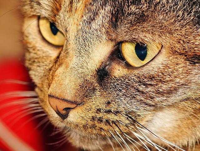 cat-558228_640.jpg