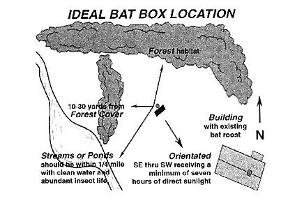 Bat Box Location Png