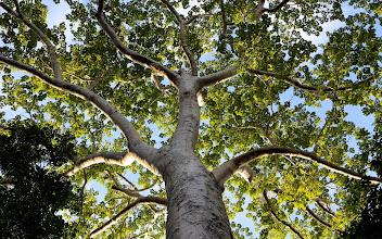 Photo: Tämäkin puu kasvaa temppelin raunioita syleillen